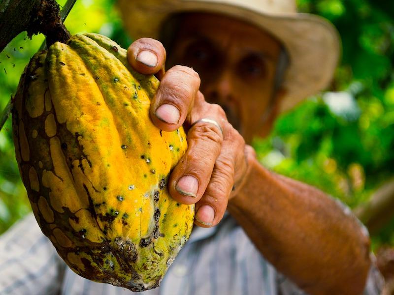Kolumbien Reiseangebote - Kakaofarm