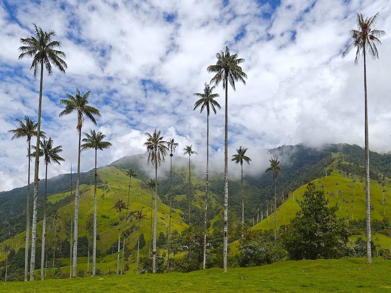 Infos Kolumbien - Wachspalmen